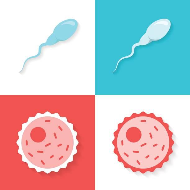sperma und eizelle oder ei legen in einem flachen stil isoliert auf weißem oder farbigen hintergrund. - eizelle stock-grafiken, -clipart, -cartoons und -symbole
