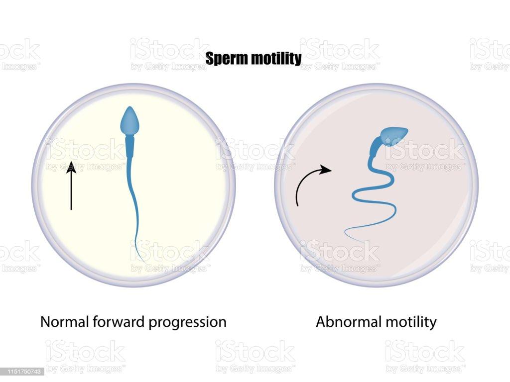 精子の運動性 - アイコンのベクターアート素材や画像を多数ご用意 - iStock