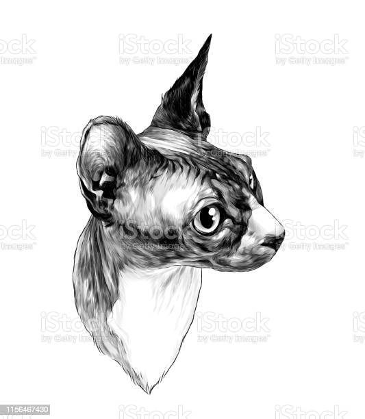 Sphinx cat muzzle in profile vector id1156467430?b=1&k=6&m=1156467430&s=612x612&h=ebk ji7fqxwpqccbnrfp4gd8t4hafqbaoi qoo04myg=