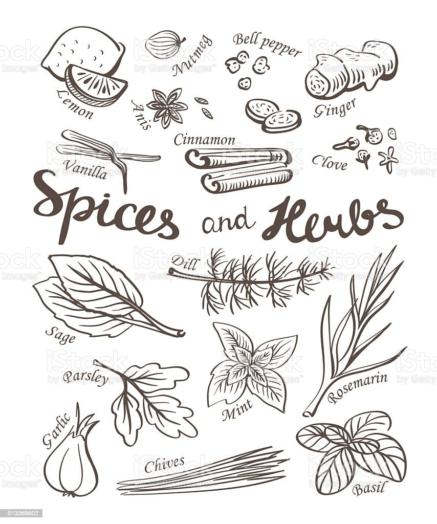 Spice and herbs collection.Hand drawn sketch icons. vector art illustration
