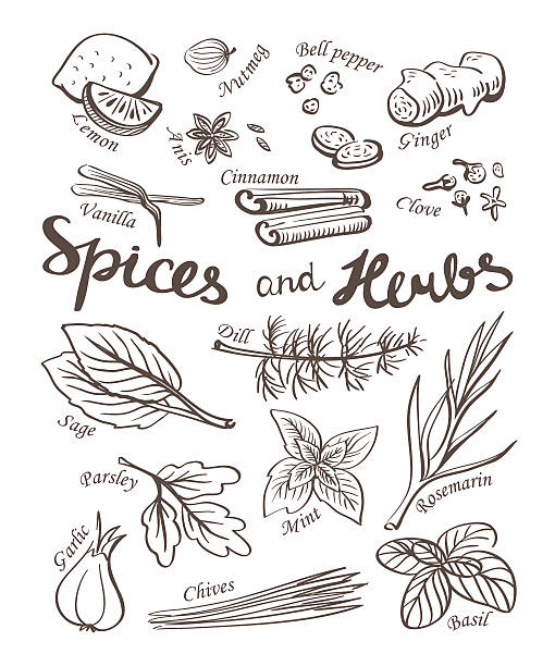 Spice and herbs collection.Hand drawn sketch icons. Spice and herbs collection.Hand drawn sketch icons. mint candy stock illustrations
