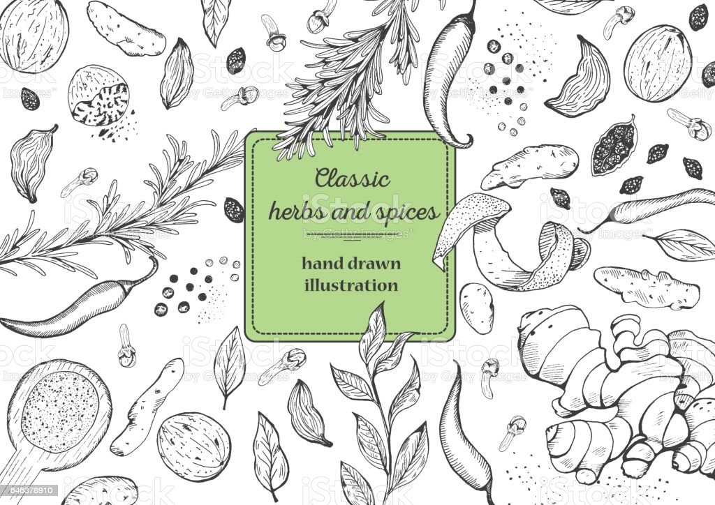 Spice and herbs top view frame. vector art illustration