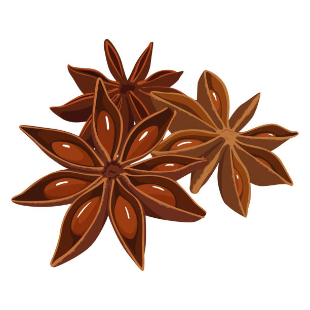 Spice illustration.Star anise used for Chinese medicine and cooking. Spice illustration.Star anise used for Chinese medicine and cooking. star anise stock illustrations