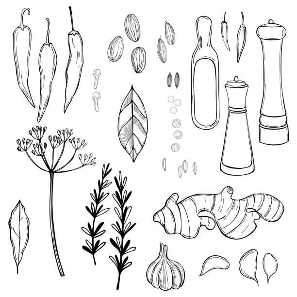 Spice set. Vector sketch  illustration. Hand drawn spice set. Vector sketch  illustration. allspice stock illustrations