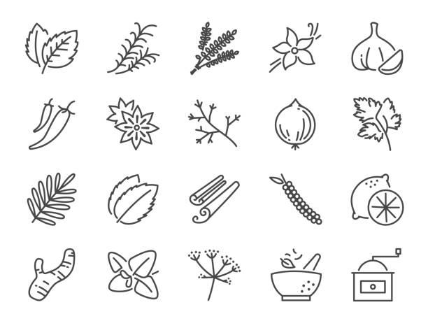 stockillustraties, clipart, cartoons en iconen met specerijen en kruiden pictogramserie. opgenomen iconen als basilicum, tijm, gember, peper, peterselie, munt en meer. - vanille