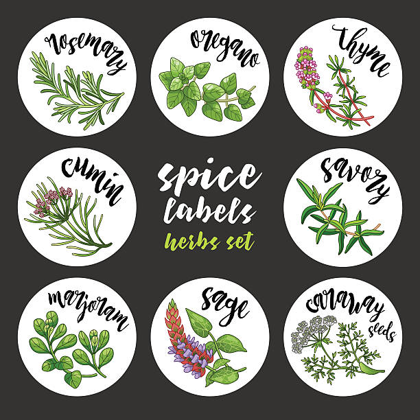 spices and herbs labels and stickers. colored vector herbal set - indisches essen stock-grafiken, -clipart, -cartoons und -symbole