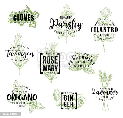 Spices and herbs lettering, natural food ingredient labels. Rosemary, mint and parsley, ginger, oregano and clove, tarragon, cilantro and lavender flower sketch. Vector seasonings illustrations