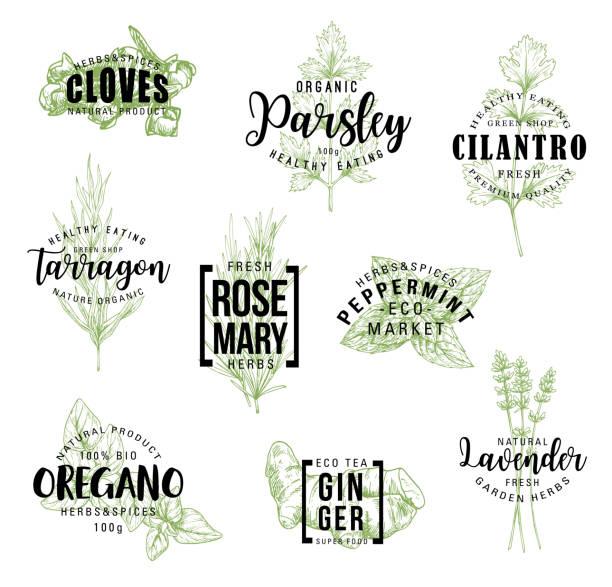 etykiety z napisami na przyprawy i zioła - liść mięty przyprawa stock illustrations