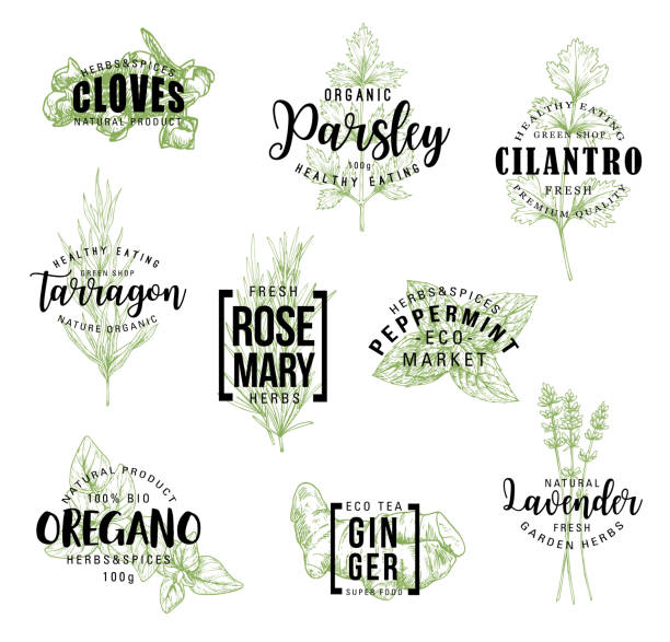Spices and herbs lettering labels Spices and herbs lettering, natural food ingredient labels. Rosemary, mint and parsley, ginger, oregano and clove, tarragon, cilantro and lavender flower sketch. Vector seasonings illustrations lavender plant stock illustrations