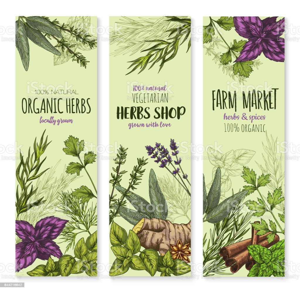 Spices and herbs vector banners set vector art illustration
