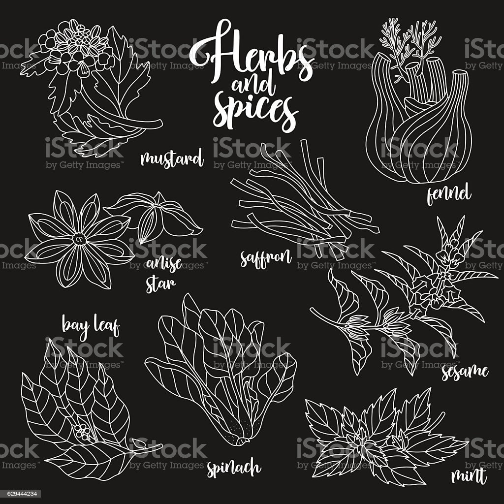 Spices and herbs vector set. Contour on dark vector art illustration