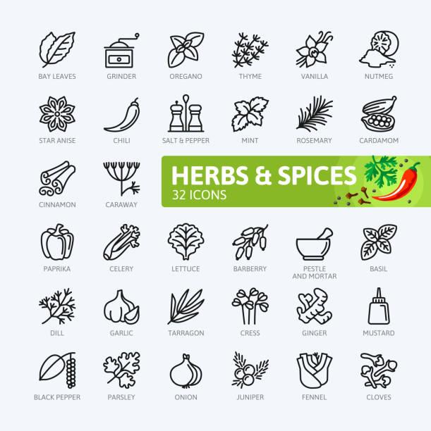 przyprawy, przyprawy i zioła - kolekcja ikon konturowych - liść mięty przyprawa stock illustrations