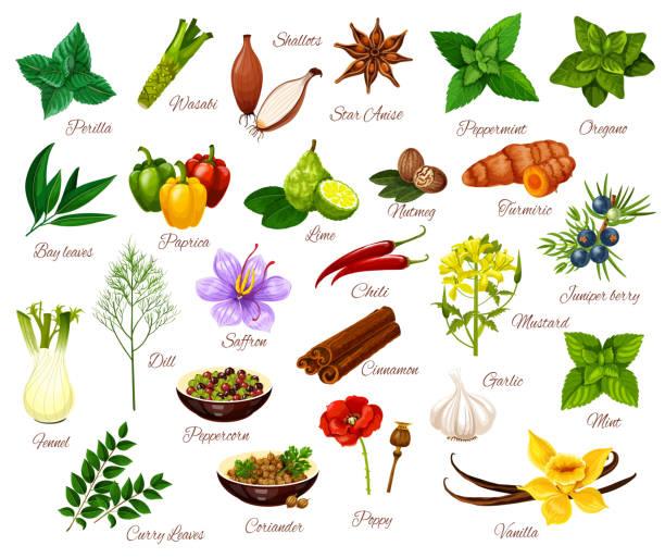 スパイス、料理のハーブ調味料、野菜 - わさび点のイラスト素材/クリップアート素材/マンガ素材/アイコン素材