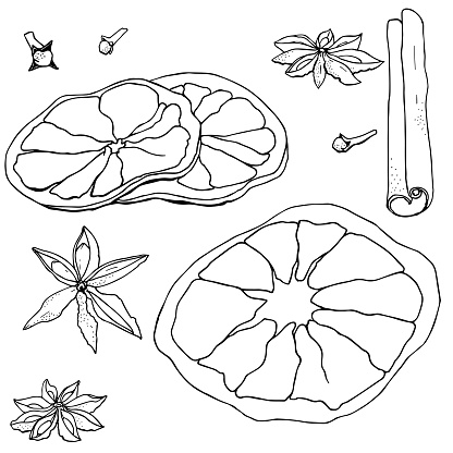 spices for mulled wine in vector