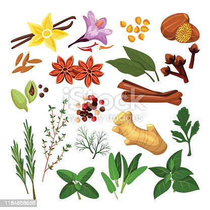 Spices and herbs set. Vector flat cartoon illustration, isolated on white background. Cinnamon, pepper, anise, clove, ginger, cooking icons and design elements.