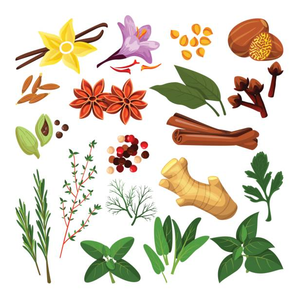 Spices, herbs set. Vector flat cartoon illustration, isolated on white background. Cooking icons, design elements. Spices and herbs set. Vector flat cartoon illustration, isolated on white background. Cinnamon, pepper, anise, clove, ginger, cooking icons and design elements. thyme stock illustrations