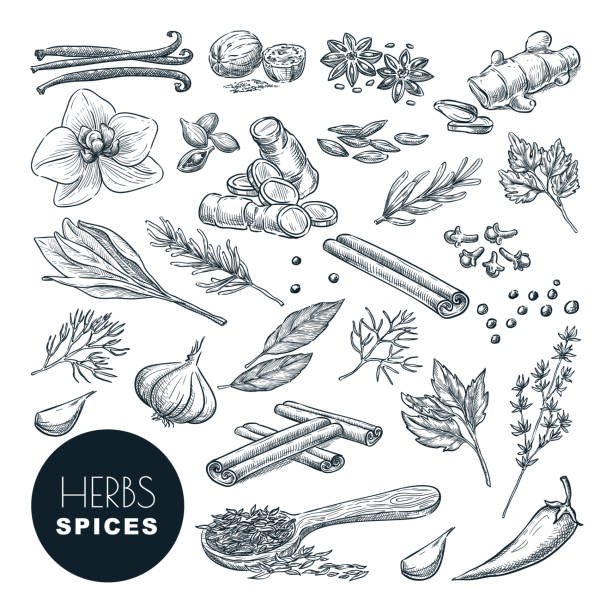 spices, herbs set. vector hand drawn sketch illustration, isolated on white background. cooking icons, design elements. - лекарственная трава stock illustrations