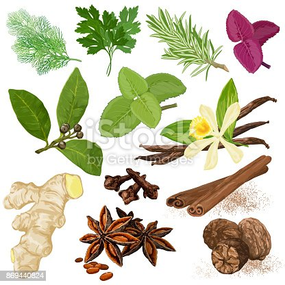 Spices. Vector menu icon set. Dill, parsley, coriander, rosemary, marjoram, basil, mint, bay leaves, vanilla, cloves, cinnamon, star anise, ginger and nutmeg hand drawn realistic symbols.