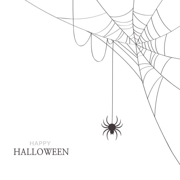 illustrazioni stock, clip art, cartoni animati e icone di tendenza di spider and cobweb on white background.happy halloween greeting card - web