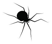 spider black widow silhouette vector symbol icon design. Beautiful illustration isolated on white background