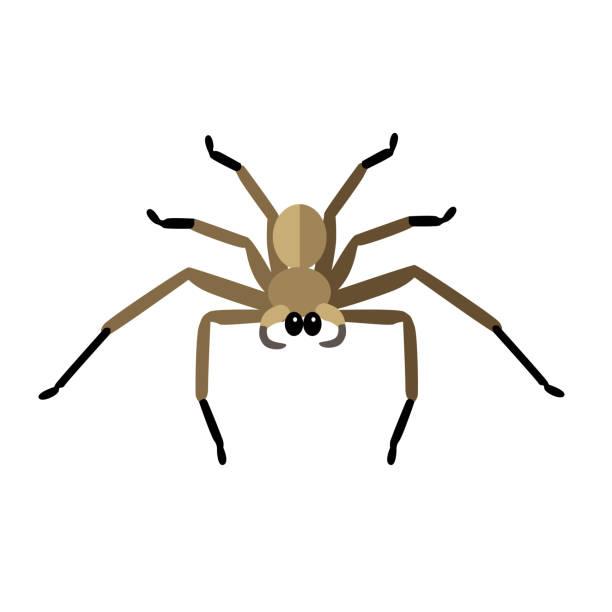 spider icon vector - tarantula stock illustrations