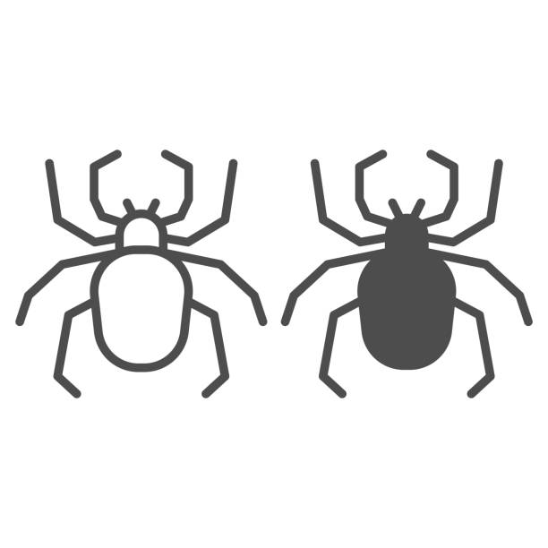 Spider line and solid icon, Insects concept, Scary arachnid insect sign on white background, spider silhouette icon in outline style for mobile concept and web design. Vector graphics. Spider line and solid icon, Insects concept, Scary arachnid insect sign on white background, spider silhouette icon in outline style for mobile concept and web design. Vector graphics arachnid stock illustrations