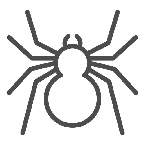Spider line icon, Insects concept, predatory arachnid sign on white background, classic spider icon in outline style for mobile concept and web design. Vector graphics. Spider line icon, Insects concept, predatory arachnid sign on white background, classic spider icon in outline style for mobile concept and web design. Vector graphics arachnid stock illustrations