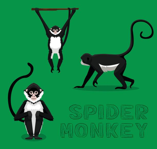 Royalty Free Spider Monkey Clip Art, Vector Images
