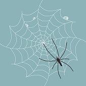 Spider on Wet Web - Vector