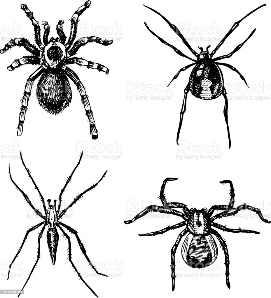 Spider Or Arachnid Species Most Dangerous Insects In The World Old ...