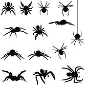 contains spiders such as the redback and a tarantula.