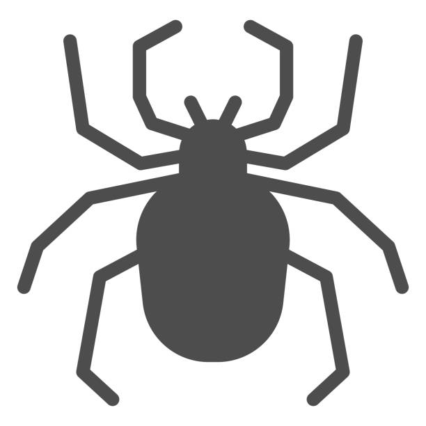 Spider solid icon, Insects concept, Scary arachnid insect sign on white background, spider silhouette icon in glyph style for mobile concept and web design. Vector graphics. Spider solid icon, Insects concept, Scary arachnid insect sign on white background, spider silhouette icon in glyph style for mobile concept and web design. Vector graphics arachnid stock illustrations