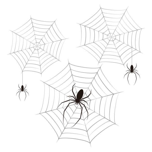 蜘蛛 蜘蛛の巣 ベクター イラスト クリップアート ベクターアートイラスト