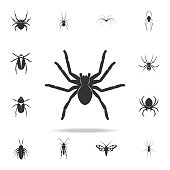 spider tarantula. Detailed set of insects items icons. Premium quality graphic design. One of the collection icons for websites, web design, mobile app