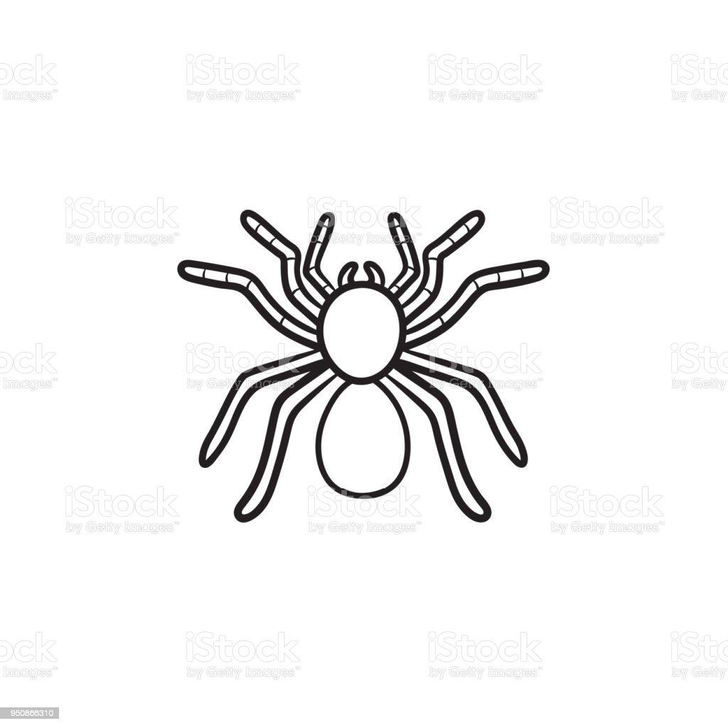 Icono De Esbozo Dibujado De Mano De Araña Tarántula - Arte vectorial ...