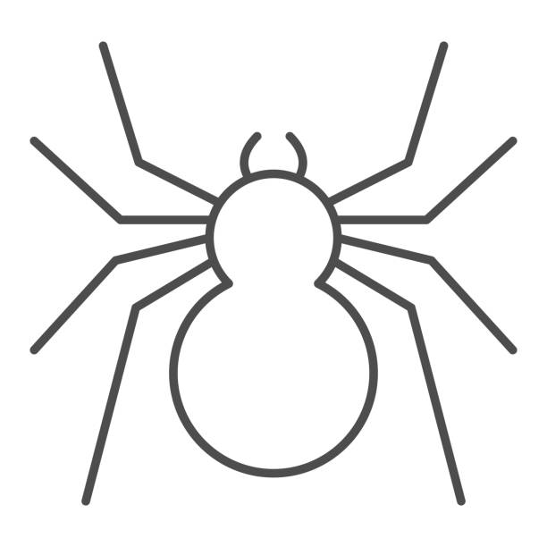 Spider thin line icon, Insects concept, predatory arachnid sign on white background, classic spider icon in outline style for mobile concept and web design. Vector graphics. Spider thin line icon, Insects concept, predatory arachnid sign on white background, classic spider icon in outline style for mobile concept and web design. Vector graphics arachnid stock illustrations