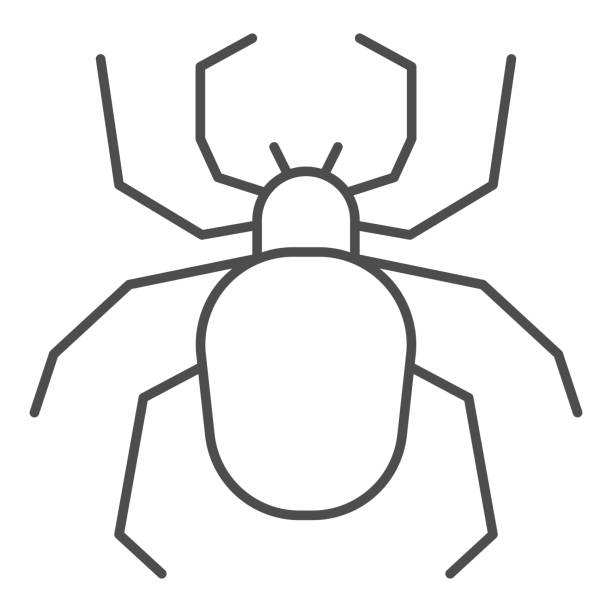 Spider thin line icon, Insects concept, Scary arachnid insect sign on white background, spider silhouette icon in outline style for mobile concept and web design. Vector graphics. Spider thin line icon, Insects concept, Scary arachnid insect sign on white background, spider silhouette icon in outline style for mobile concept and web design. Vector graphics arachnid stock illustrations