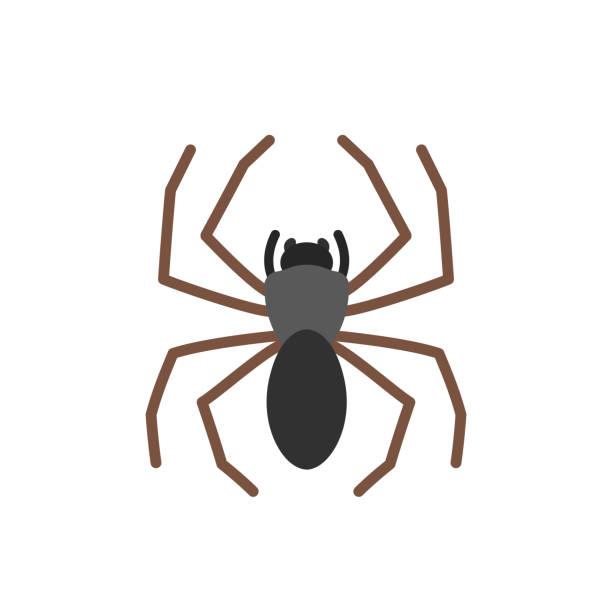 spider - tarantula stock illustrations