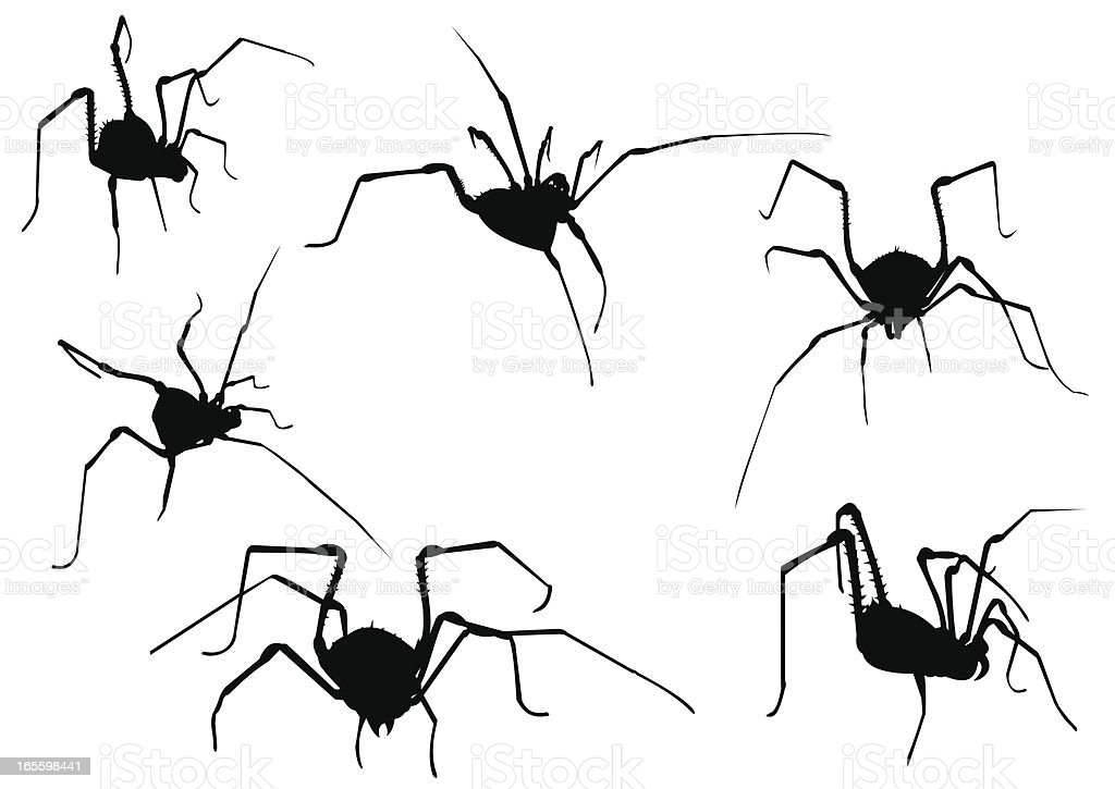 Spider royalty-free spider stock vector art & more images of animal