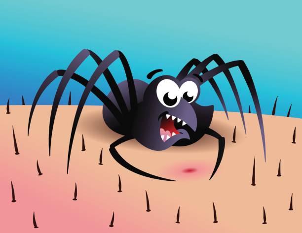 Spider vector art illustration