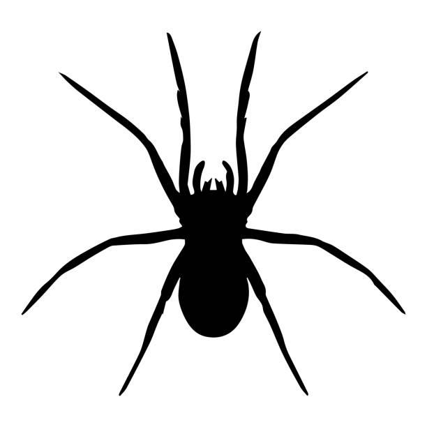 spider vector isolated - tarantula stock illustrations