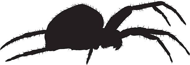 spider vector - tarantula stock illustrations