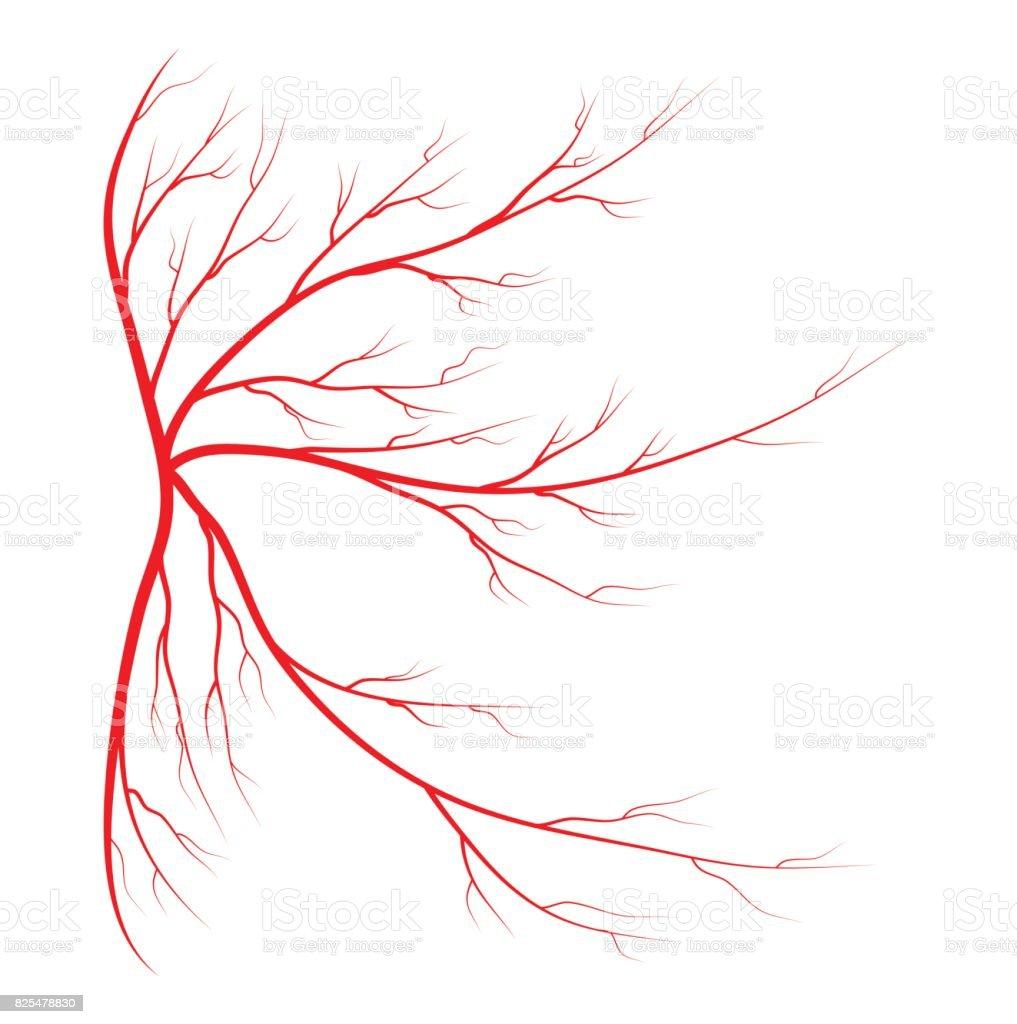 spider vein vector symbol icon design. Beautiful illustration isolated on white background vector art illustration