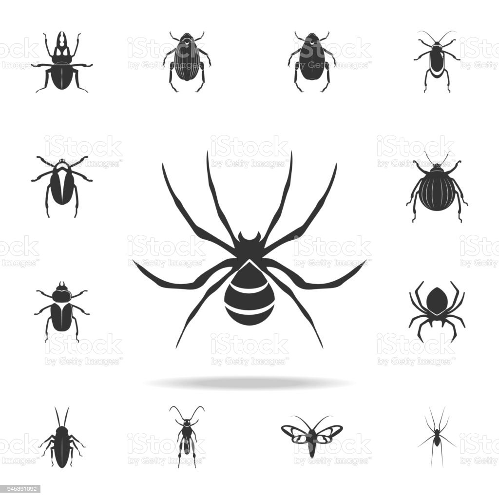 spider wasp. Detailed set of insects items icons. Premium quality graphic design. One of the collection icons for websites, web design, mobile app vector art illustration