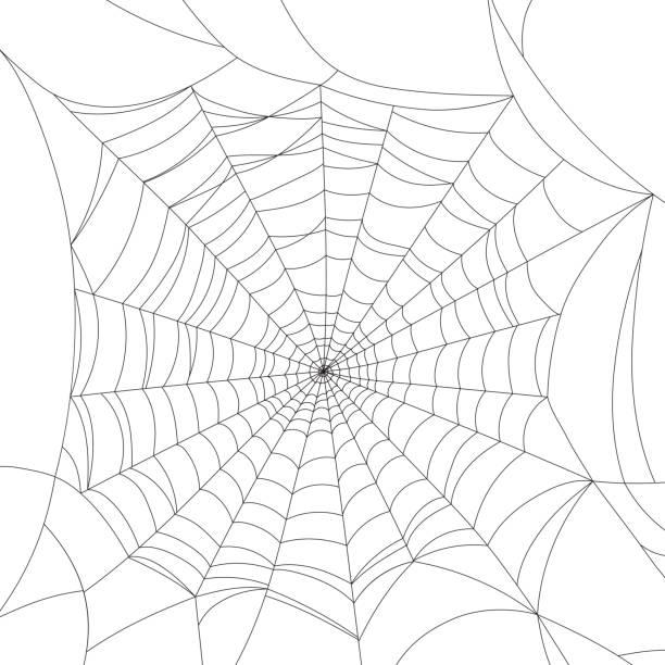 Vector Illustration Web Designs: Best Spider Web Illustrations, Royalty-Free Vector