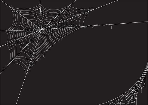 Spider web vector illustration