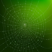 Realistic spider web with water drops on green background vector illustration