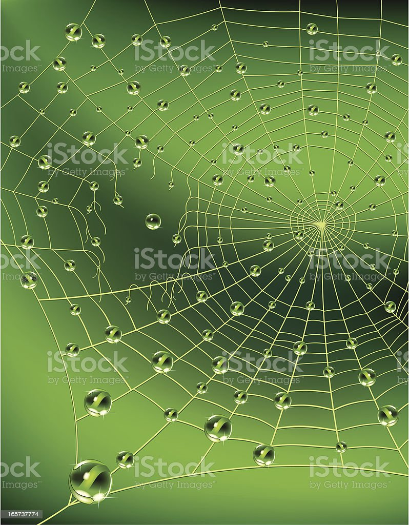 Spider web with water drops vector art illustration