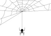 istock Spider while it's making its web 165800529