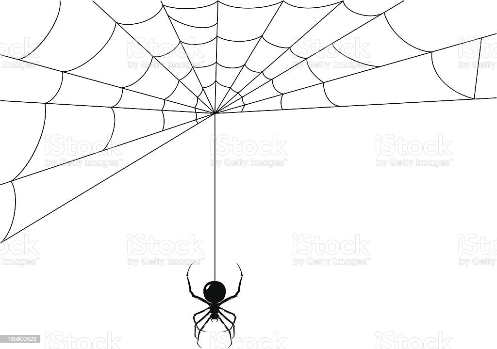 Spider while it's making its web vector art illustration